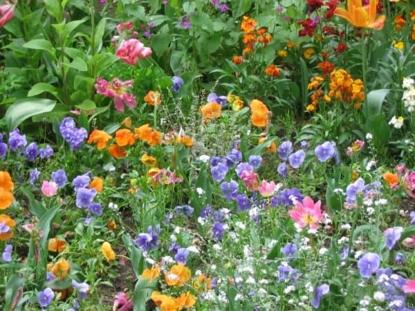Łąki kwiatowe zakwitną w Radomsku?