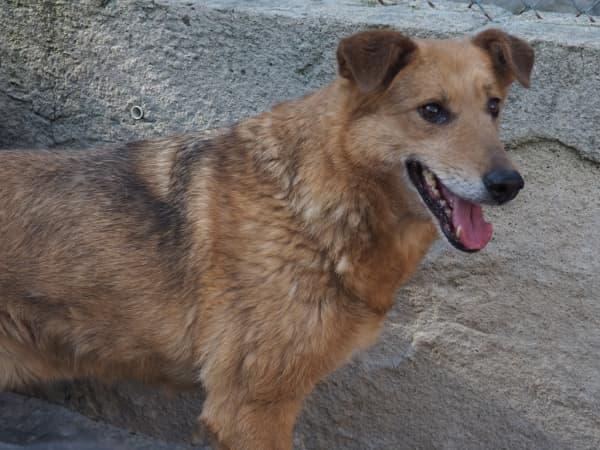 Pies, najlepszy przyjaciel człowieka – dziś ma swoje święto