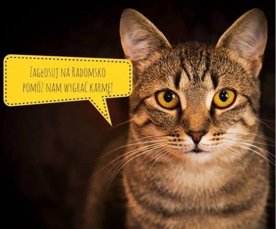 Zagłosuj na koty z Radomska