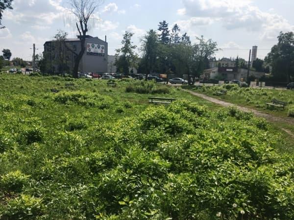 Znamy wykonawcę  rewitalizacji parku przy ul. Sierakowskiego