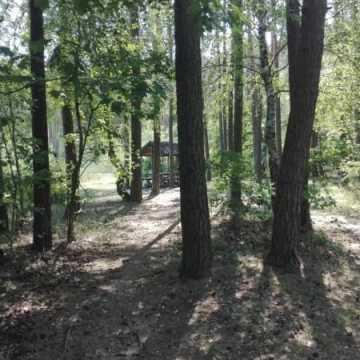 Propagują ekologię – sprzątali las na Suchej Wsi