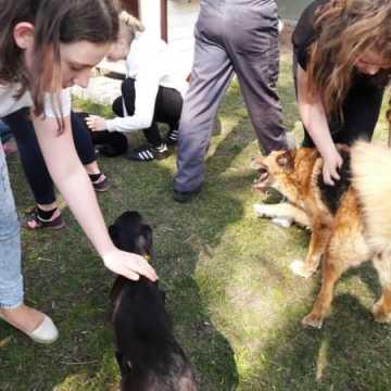 Z pomocą dla zwierząt ze schroniska
