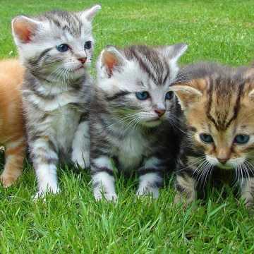 Zbiórka na kojec dla kotów w radomszczańskim schronisku