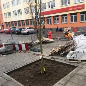 Na Reymonta pojawiły się drzewa