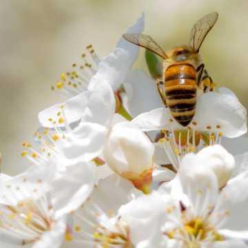 Napisz bajkę o pszczołach