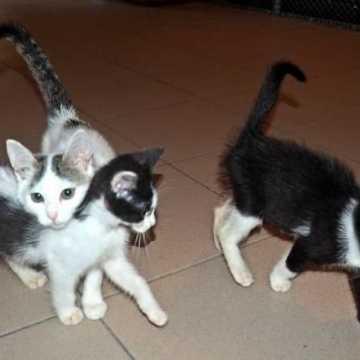 Koty czekają na adopcję