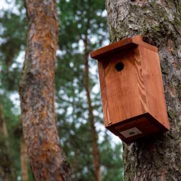 Bełchatów: W Parku 1000-lecia zawisły budki lęgowe