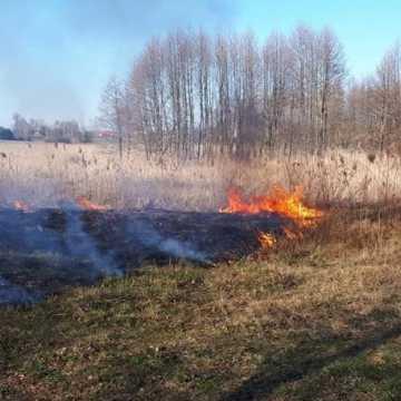 Kolejne pożary lasów w powiecie radomszczańskim