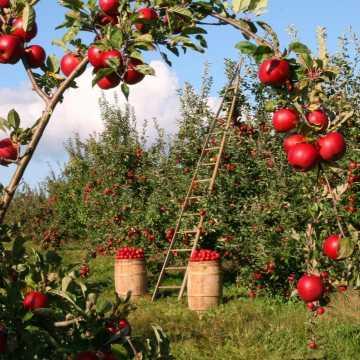 Umowy na dostawy produktów rolnych - porady UOKiK dla rolników