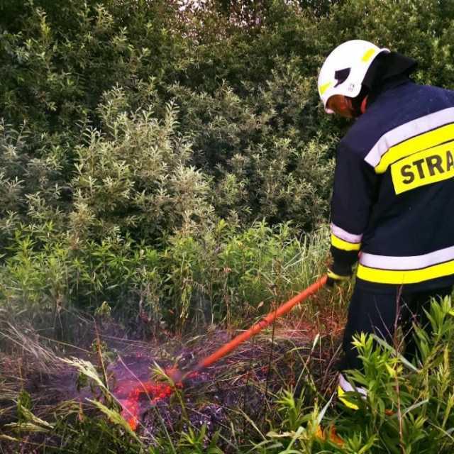 Przy torach w  miejscowości Pirowy spłonęły 3 ary nieużytków