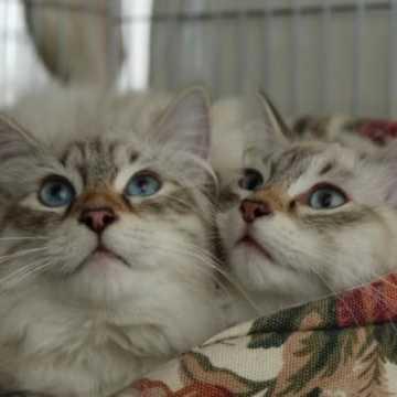 Zbiórka na rzecz kotów ze schroniska