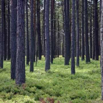 Akcja sprzątania lasu na Suchej Wsi