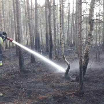 Pożar lasu w Małej Wsi