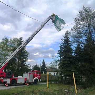 Strażacy w Kamieńsku ściągali altanę z drzewa