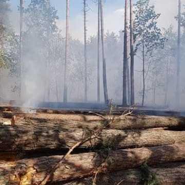 Płonął las