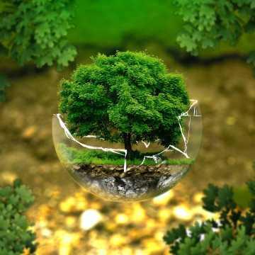 Razem sprzątamy i sadzimy drzewa. Można otrzymać darmowe sadzonki!