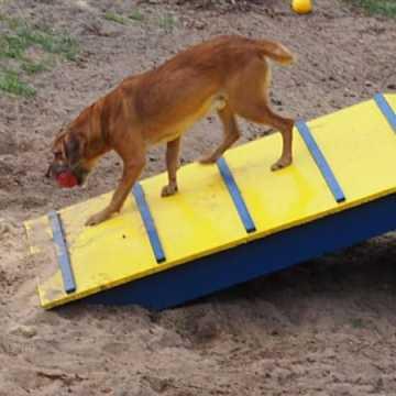 W schronisku dla zwierząt w Radomsku powstał Mini Dog Park