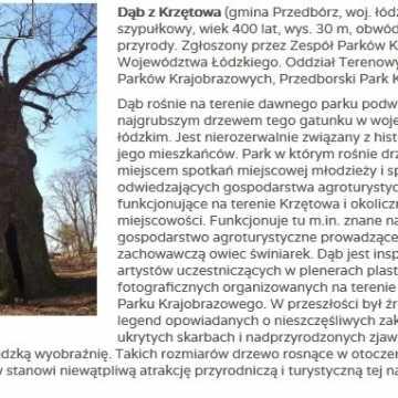 """Dąb z Krzętowa ma szansę zostać """"Drzewem Roku"""""""