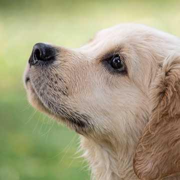 W lipcu w Radomsku kolejna akcja darmowego czipowania psów i kotów