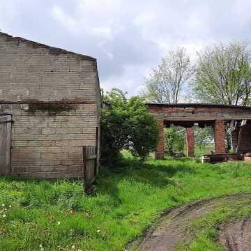 Krowy bez dachu nad głową i jedzenia w jednym z gospodarstw w Dobryszycach? Policja sprawdziła takie doniesienia
