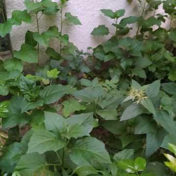 Ogródki przy blokach w Radomsku to nie zawsze dobra wizytówka. Czy powinny zostać zlikwidowane?