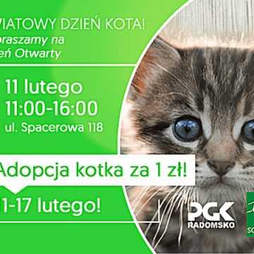 Światowy Dzień Kota - adoptuj zwierzaka ze schroniska