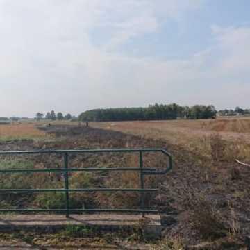 Paliły się trawy w Stępkach w gminie Dobryszyce