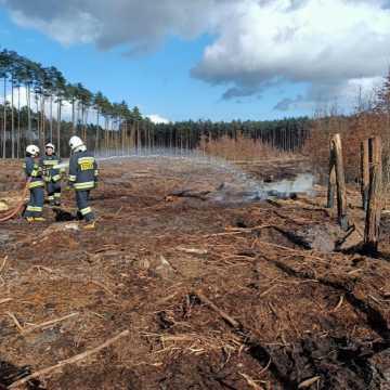 Strażacy gasili niedogaszone ogniska