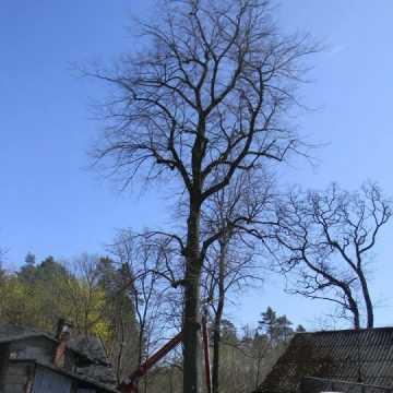 Nowy pomnik przyrody w Radomsku