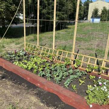 Ogródek warzywny przy Interku w Radomsku