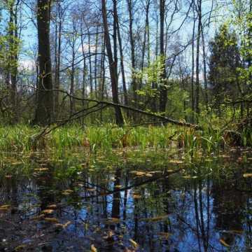 Propozycja na majówkę: Rezerwat Przyrody Dębowiec