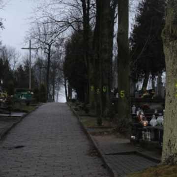Wielkie liczenie drzew …