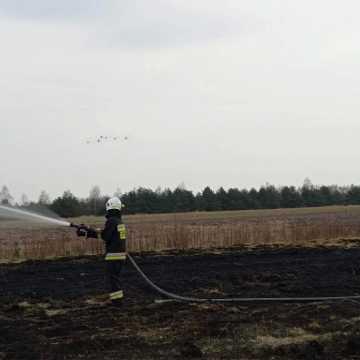Pożar suchej trawy w miejscowości Górki