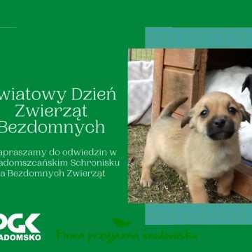 4 kwietnia - Światowy Dzień Bezdomnych Zwierząt