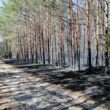 W Małej Wsi spłonął hektar lasu