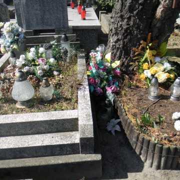 Zatrute drzewo na Starym Cmentarzu w Radomsku. Sprawę bada prokuratura