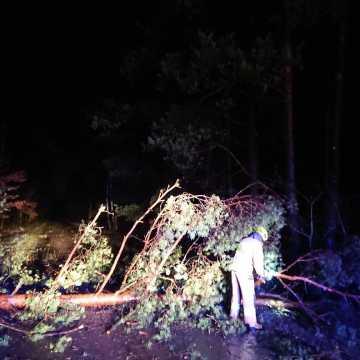 Powalone drzewa, zerwane dachy, to skutki wczorajszej wichury w powiecie radomszczańskim