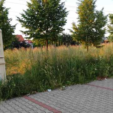Betonoza kontra łąki kwietne