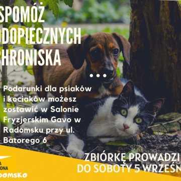 Ekipa Szymona z Radomska zbiera dary dla schroniska dla zwierząt