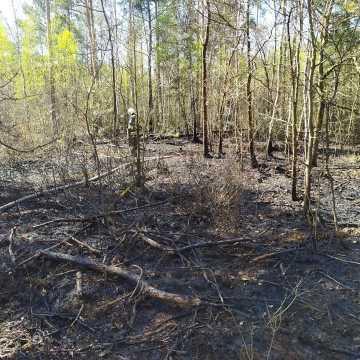 W Myśliwczowie palił się hektar poszycia leśnego