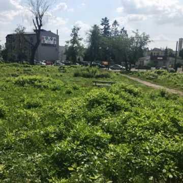 Brak chętnych na rewitalizację parku przy ul. Sierakowskiego