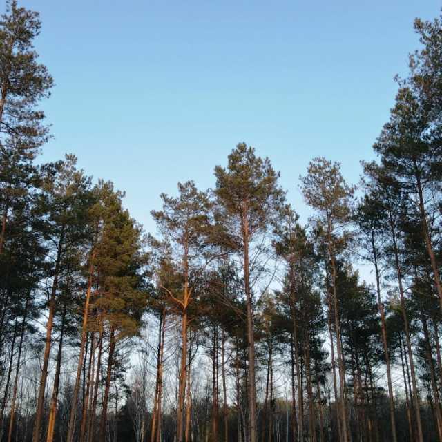 Jesteś właścicielem lasu i chcesz dokonać w nim inwestycji? W listopadzie będzie można ubiegać się o wsparcie