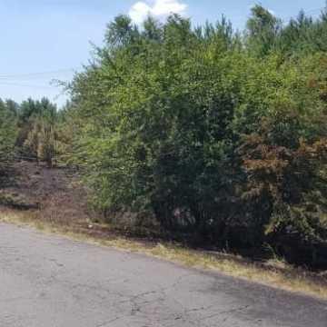 Pożar poszycia leśnego w Borowej