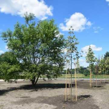 Powstaje budżetowy park na Wymysłówku