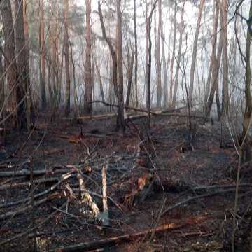 Potężny pożar w Łęgu