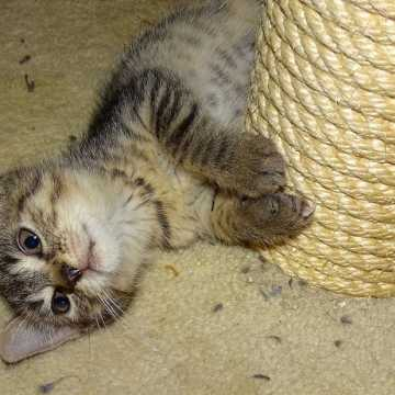 Adoptuj kota za złotówkę