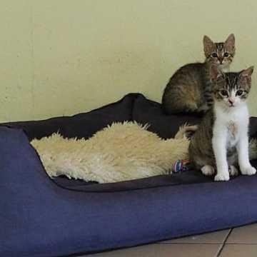 Adoptuj kotka za złotówkę