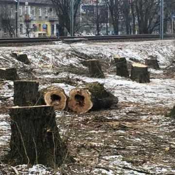 Zielone pogotowie dla drzew