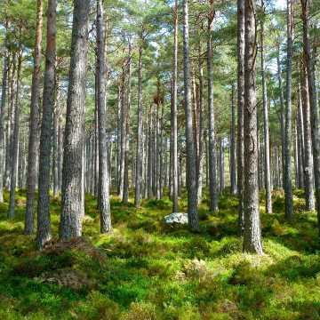 Wprowadzono zakaz wstępu do lasów i parków narodowych