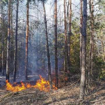 Spaliło się 10 ha poszycia leśnego